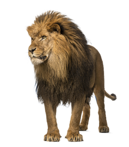The lion for the advantages of Hagemann Systems